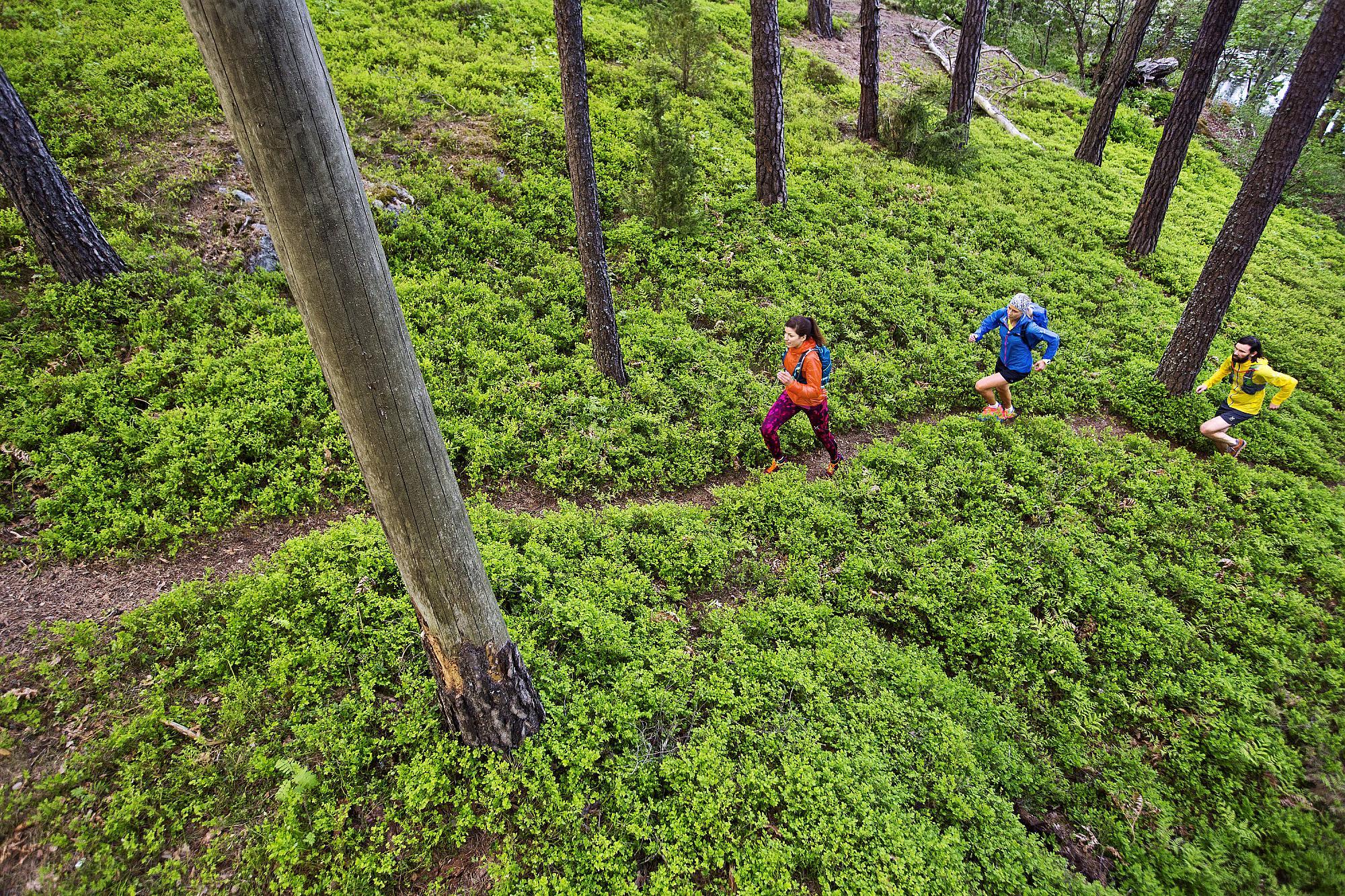 tre löpare i skogen