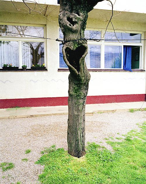 Utväxt på träd