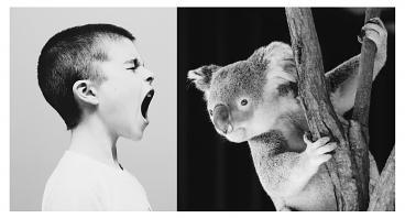 fotomontage skrikande pojke lyssnande koala